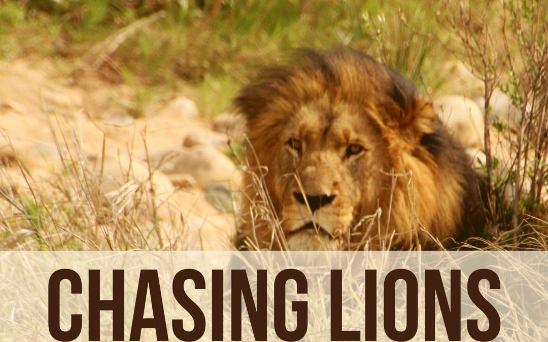 Chasing Lions!